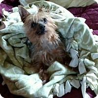 Adopt A Pet :: NIKKO - Oakland, CA