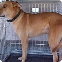 Adopt A Pet :: Cube - Las Vegas, NV