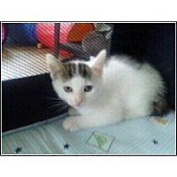 Adopt A Pet :: Lily - Catasauqua, PA