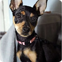 Adopt A Pet :: Tabetha - New York, NY
