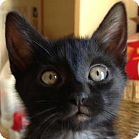 Adopt A Pet :: Rainbow Dash - Winchester, CA