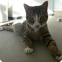Adopt A Pet :: Bo - Hamburg, NY