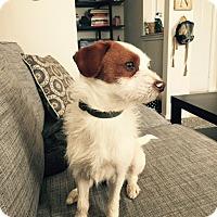 Adopt A Pet :: Bruce In Dallas - Dallas/Ft. Worth, TX