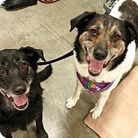 Adopt A Pet :: Nikko & Meeka - Bellingham, WA