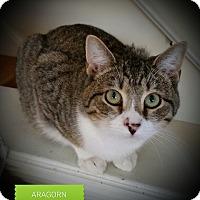 Adopt A Pet :: Aragorn - Fairborn, OH