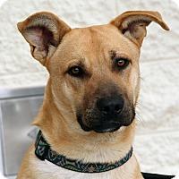 Adopt A Pet :: Rex - Palmdale, CA