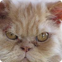 Adopt A Pet :: Gibbs - DFW Metroplex, TX