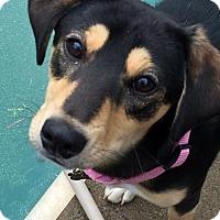 Adopt A Pet :: Cadbury - Hewitt, NJ