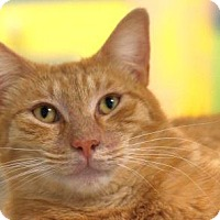 Adopt A Pet :: Marmalaid - Gulfport, MS