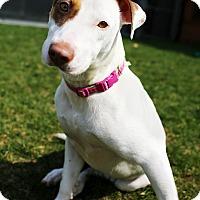 Adopt A Pet :: Tammy - Appleton, WI