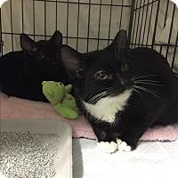 Adopt A Pet :: Quinn - New  York City, NY