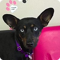 Adopt A Pet :: Addie - Fargo, ND