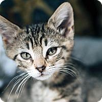 Adopt A Pet :: Elfin - Durham, NC