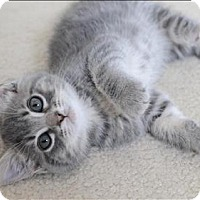 Adopt A Pet :: Sierra K3 Aka Penelope - Sherwood, OR