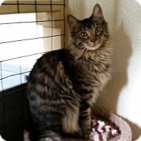 Adopt A Pet :: Little Louie - Prescott, AZ