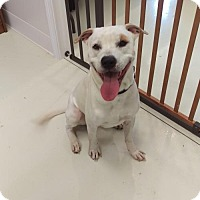 Adopt A Pet :: Lucky - Mt. Gilead, OH