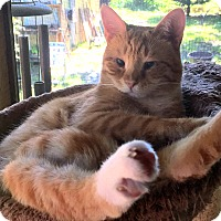Adopt A Pet :: Magoo - Durham, NC