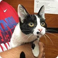 Adopt A Pet :: Mary Kate - Fairfax, VA