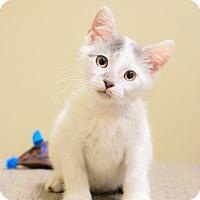 Adopt A Pet :: Chet - Chicago, IL
