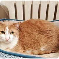 Adopt A Pet :: Big Mac - Welland, ON