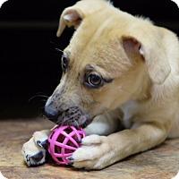 Adopt A Pet :: Olivia Giannulli - Jersey City, NJ