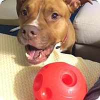 Adopt A Pet :: Mila - alexandria, VA