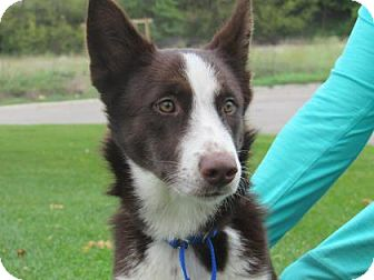 Siberian Husky Mix Dog for adoption in Northfield, Minnesota - Chloe