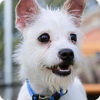 Adopt A Pet :: Kramer - Atlanta, GA