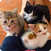 Adopt A Pet :: Cole, Piper, and Phoebe - Arlington, VA