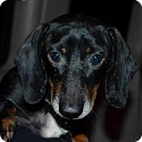 Adopt A Pet :: Pawnee - Aurora, CO