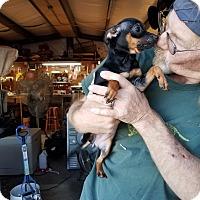 Adopt A Pet :: BINXIE - Lubbock, TX