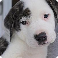 Adopt A Pet :: Harry - Danbury, CT