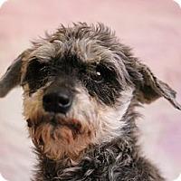 Adopt A Pet :: Annie - Roosevelt, UT