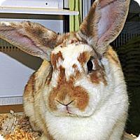 Adopt A Pet :: Gidget - Cheyenne, WY
