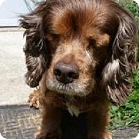 Adopt A Pet :: Hannah - Seymour, CT