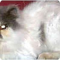Adopt A Pet :: Nicky - Jacksonville, FL