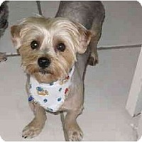 Adopt A Pet :: Maximo - Gulfport, FL