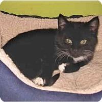 Adopt A Pet :: Delilah - Colmar, PA