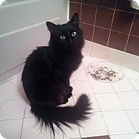 Adopt A Pet :: Sherry - Bensalem, PA