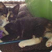Adopt A Pet :: Annabelle - Horsham, PA