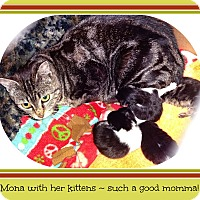 Adopt A Pet :: Mona - New Richmond,, WI