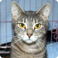 Adopt A Pet :: Sylvia - North Branford, CT