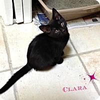 Adopt A Pet :: Clara H. - Marietta, GA