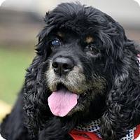 Adopt A Pet :: Branna - Alpharetta, GA