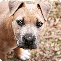 Adopt A Pet :: Pepper - in Maine - kennebunkport, ME