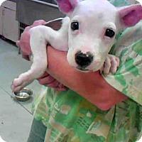Adopt A Pet :: NEWTON - Conroe, TX