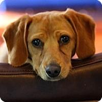 Adopt A Pet :: Tina - Foster needed - Centreville, VA