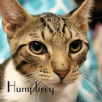 Adopt A Pet :: Humphrey - Wichita Falls, TX
