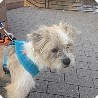 Adopt A Pet :: Trey - Philadelphia, PA