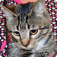 Adopt A Pet :: Spice - Wildomar, CA